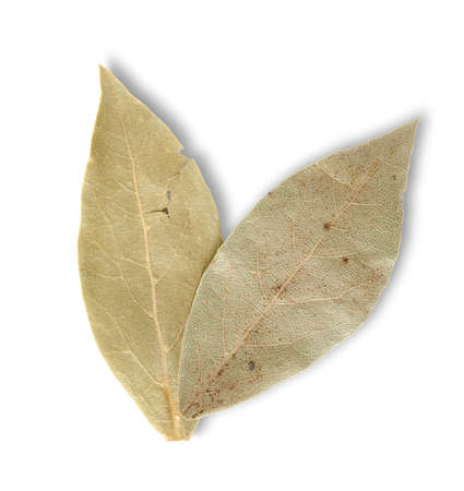 Two bay leaves Stock Photo