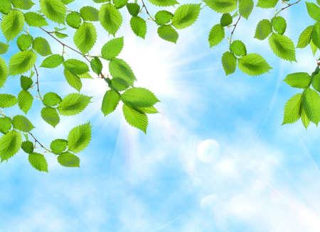 Leaf opposite sun and sky