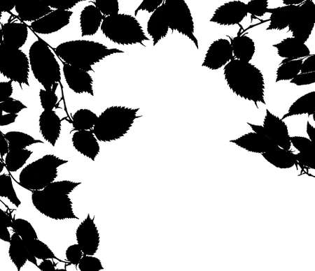 Black white leaves photo