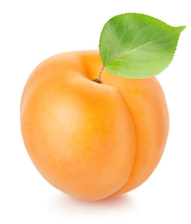 Apricot with leaf photo