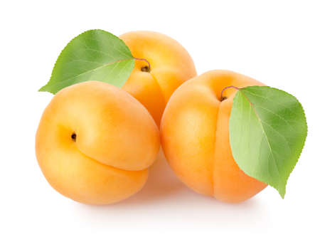 Apricots with leaves photo