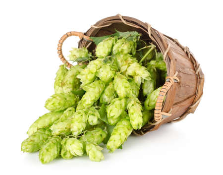 Hops in a wooden basket Stock Photo