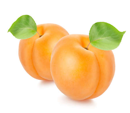Two apricots with leaves Stock Photo - 16251736