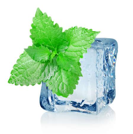 menta: Cubo de hielo y menta