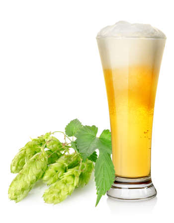 Light beer and hop photo