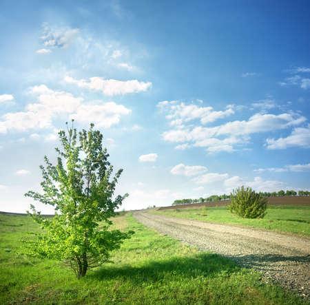 Tree near a country road Stock Photo - 19496584