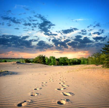 Footprints in the sand in desert at sunset Banco de Imagens