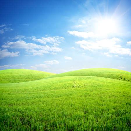 Field of fresh grass Banco de Imagens