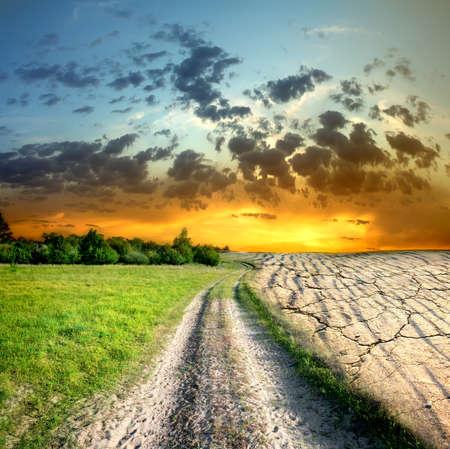 toter baum: Auswirkungen der globalen Erwärmung auf eine Art Lizenzfreie Bilder