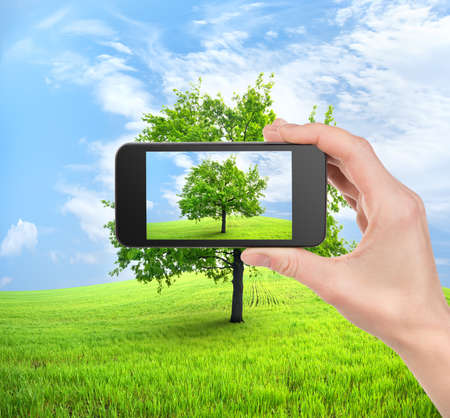 Mobile phone in hand and tree in field Stock Photo