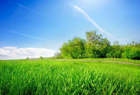 Grass in field Stock Photo - 20382170