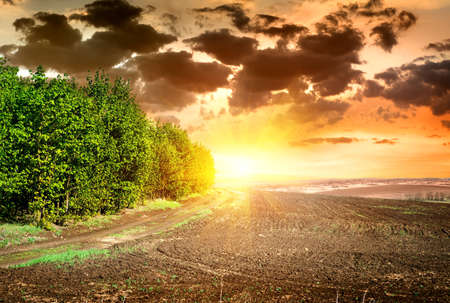Scene on sunset over black ploughed field photo
