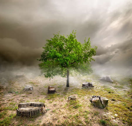 Green tree among the stumps in cloudy day photo