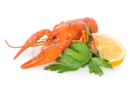 Crawfish and lemon isolated on a white background photo