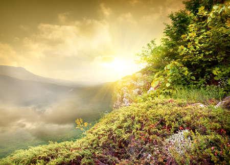 juniper: Bright sun in the mountains, Crimea, Ukraine