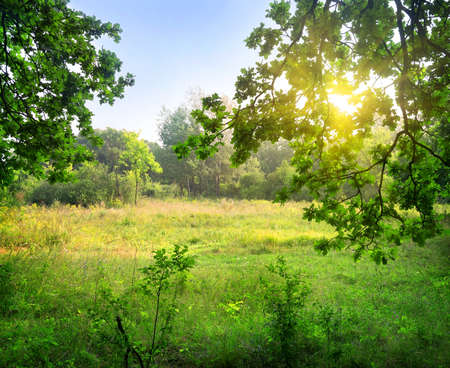 Clearing in the forest at sunny day Stock Photo