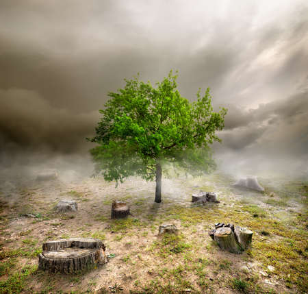 deforestacion: Árbol verde entre los tocones en día nublado Foto de archivo