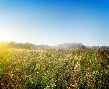 meadow  grass: Amanecer sobre la hierba del prado de verano