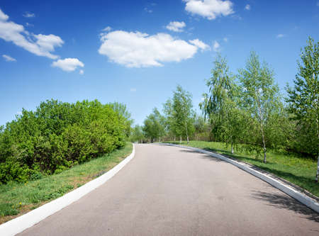 Asphalted road among birches at sunny day photo
