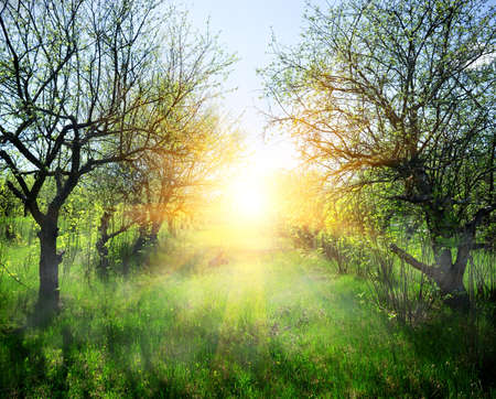 clearing: Beautiful sunbeams over the glade in a spring forest