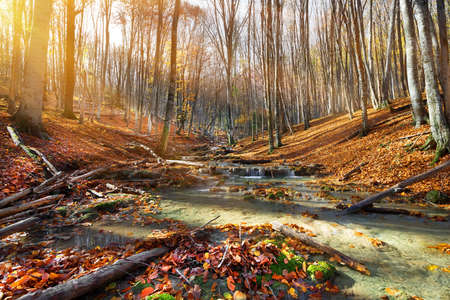 Wild mountain river in the autumn forest photo