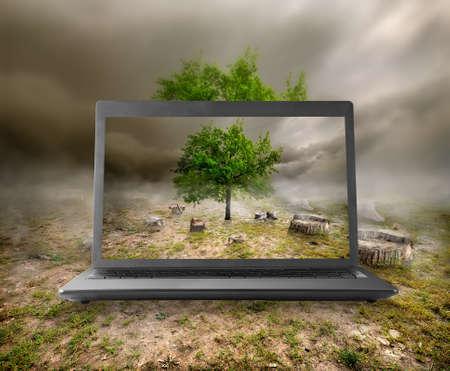 arboles secos: �rboles y tocones en el monitor de un ordenador port�til Foto de archivo