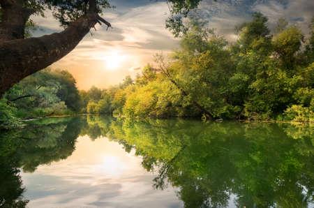 川のそばの木の後ろに太陽