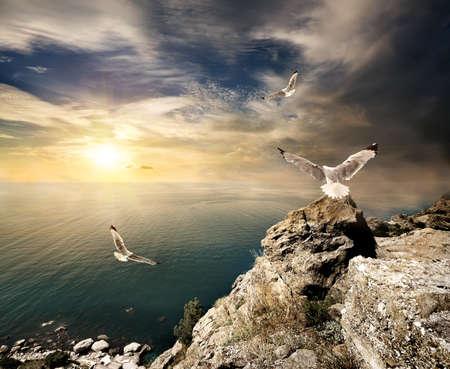 horison: Seagulls and sunset