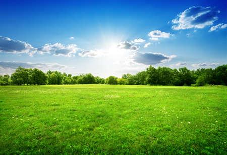緑の草や木
