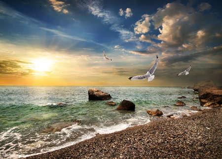 horison: Seagull over sea