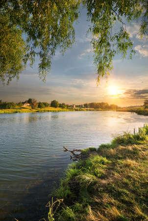 osier: Osier by the river