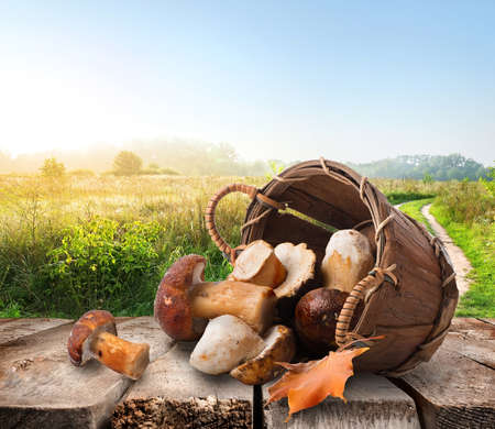 Mushrooms in a basket on wooden table Stock Photo