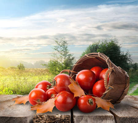 tomate de arbol: Tomates en la mesa Foto de archivo