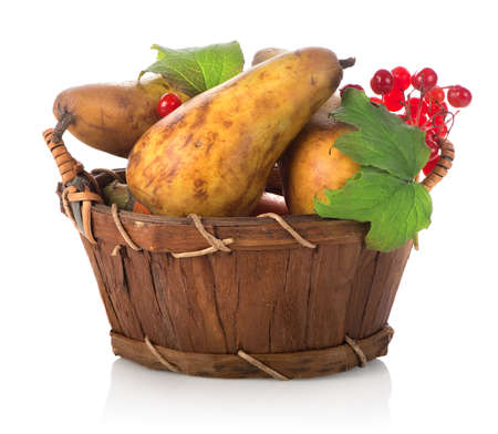 Pear and viburnum photo