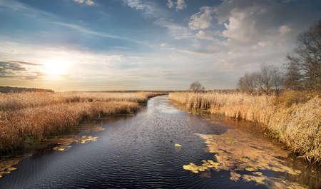 canne: Canne secche e alberi spogli sul fiume autunno Archivio Fotografico