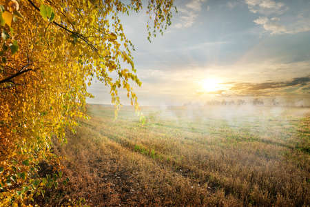 Fog in the autumn field at the sunrise