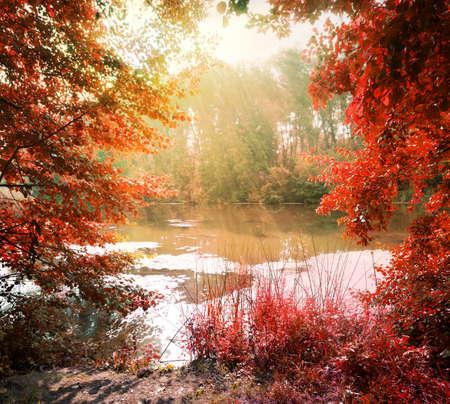 canne: Raggi di sole sopra il fiume calmo in autunno