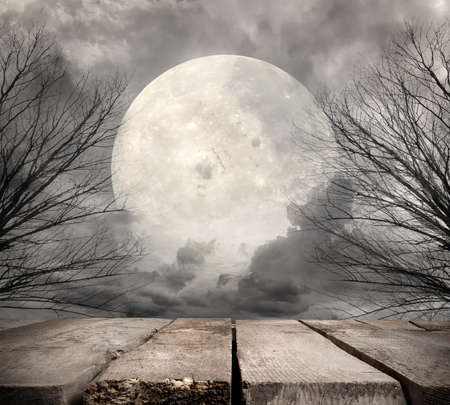 horror: Spooky forest with full moon. Elements of this image furnished by NASA