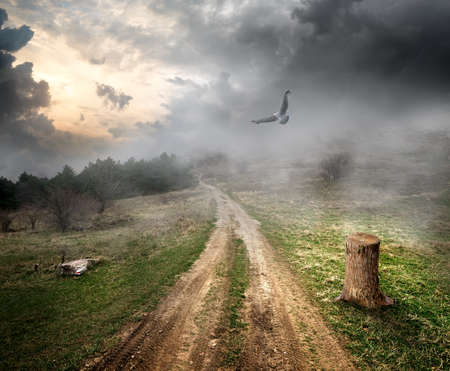 felling: Bird over country road and storm clouds Stock Photo