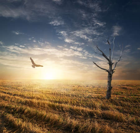 autumnn: Dry tree and bird in autumnn field at sunset