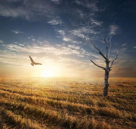 autumnn: Dry tree and bird in autumnn field at sunset