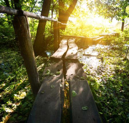 森の中の小さな木製の橋の上の太陽