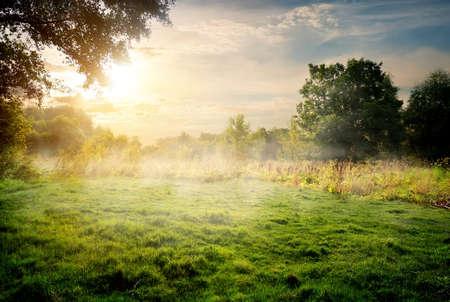 晴れた夏の朝の森では、クリア 写真素材