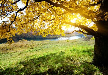 明るい森で穏やかな川日の出
