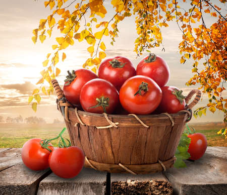 完熟トマトの自然の背景にバスケット 写真素材