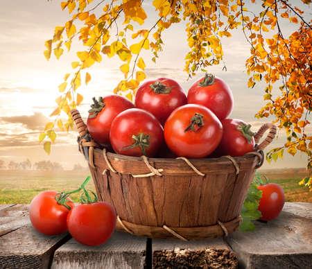 tomate de arbol: Tomates maduros en una cesta sobre un fondo de naturaleza Foto de archivo