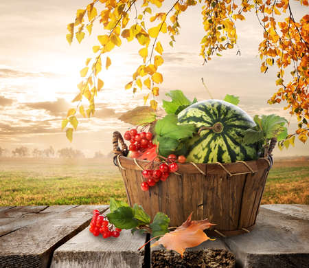 Basket with watermelons on a nature background photo