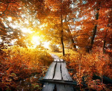 tree in autumn: Bridge in the autumn forest with red leaves Stock Photo