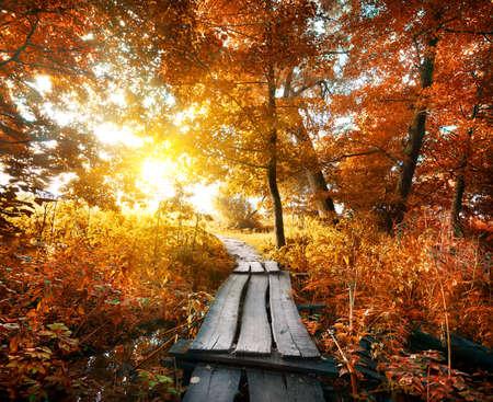 Brug in de herfst bos met rode bladeren