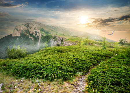 Meadow of green juniper in mountains at sunrise photo
